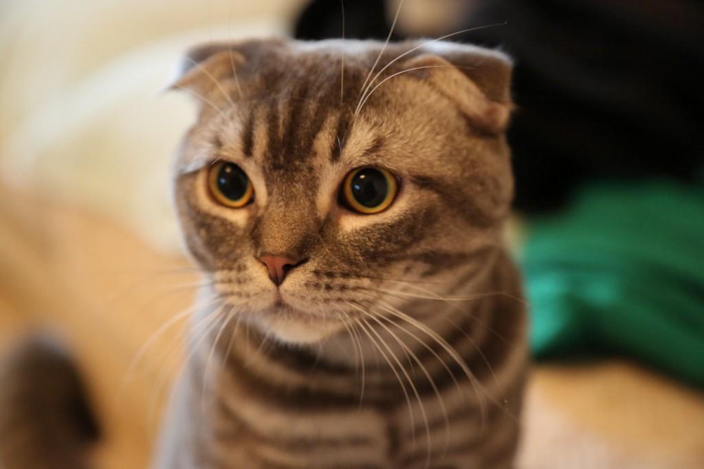 cat-796071_1920